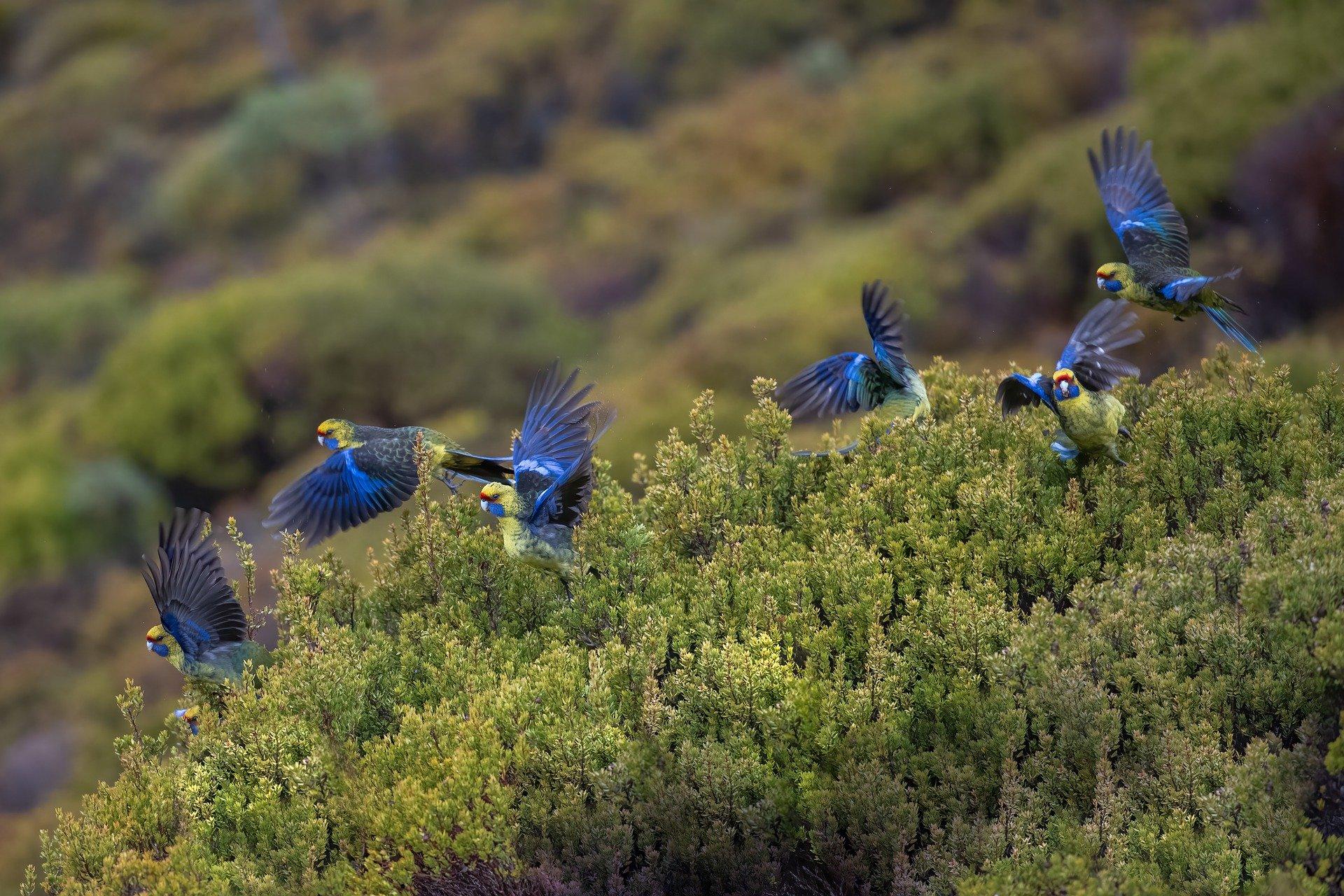ZABRINJAVAJUĆA STUDIJA Svakoj petoj vrsti ptica prijeti opasnost od izumiranja